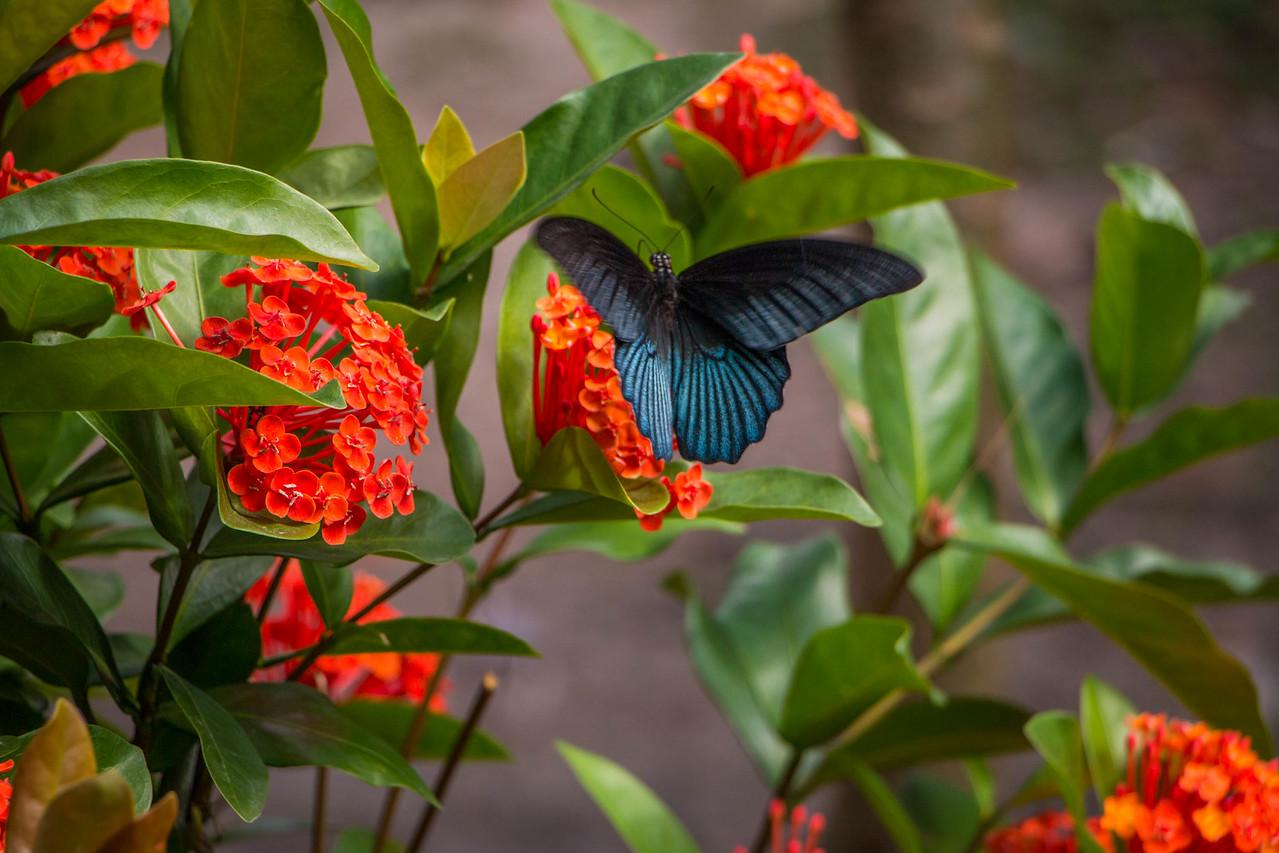 mekong delta butterflies
