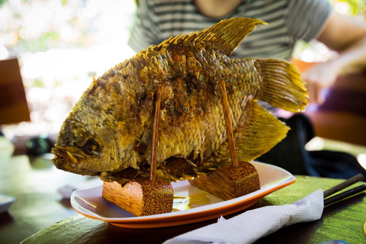 mekong delta fish