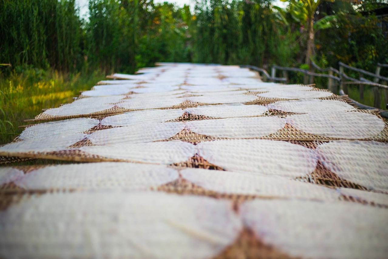 mekong delta coconut