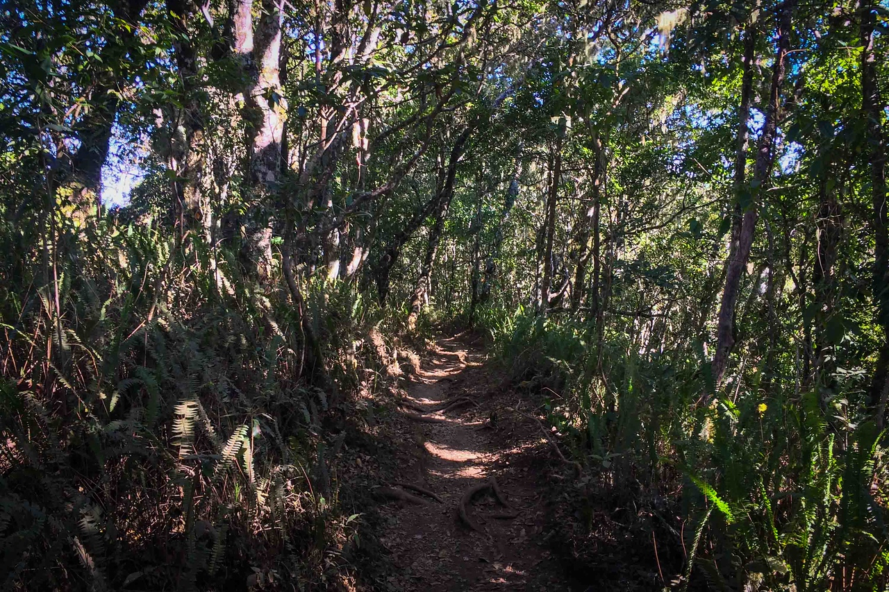 Mount Rinjani trek jungle section