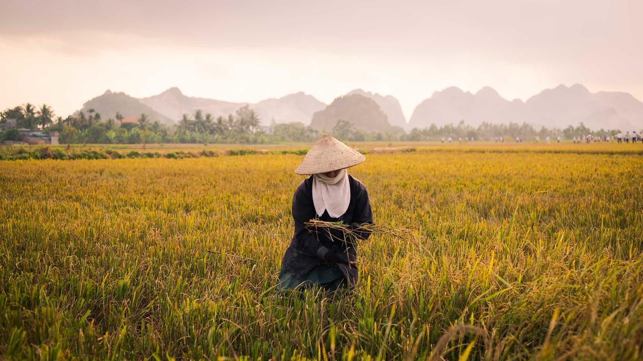 Homestay Vietnam